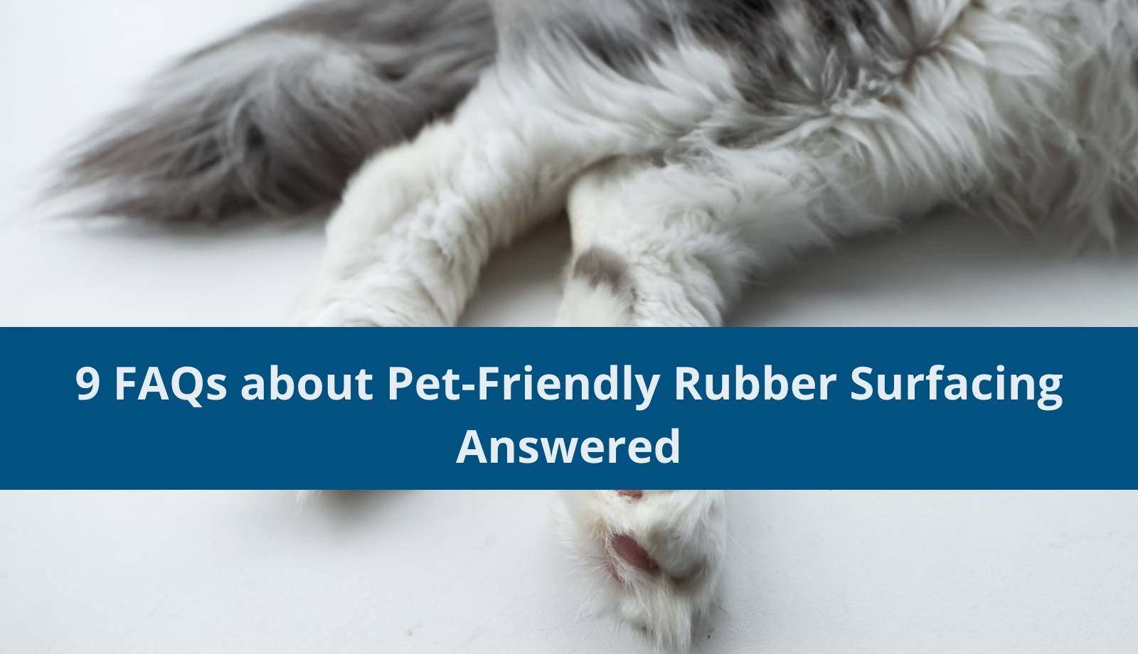 9 FAQs about Pet-Friendly Rubber Surfacing Answered